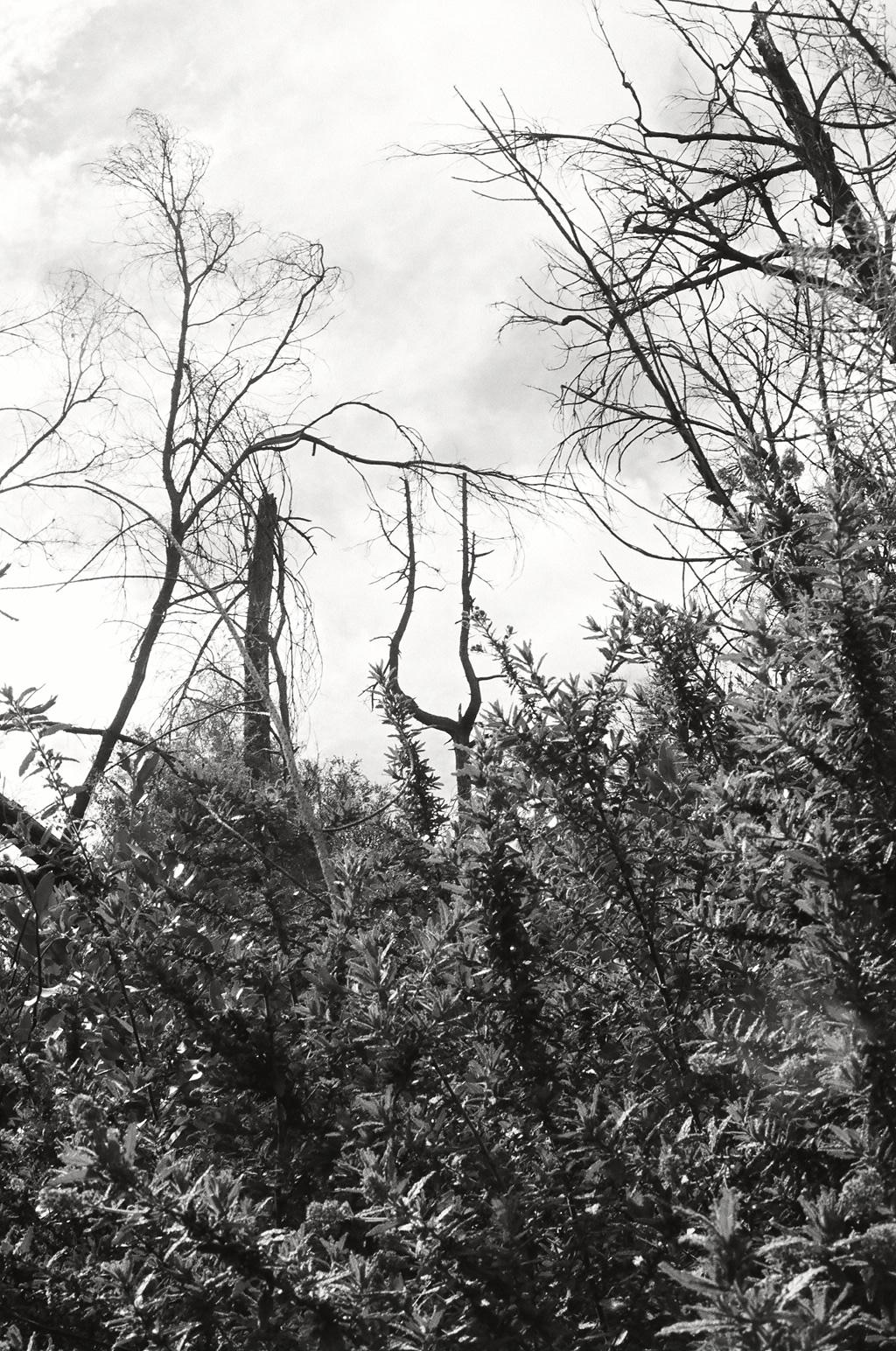 Motorhead Tree 1