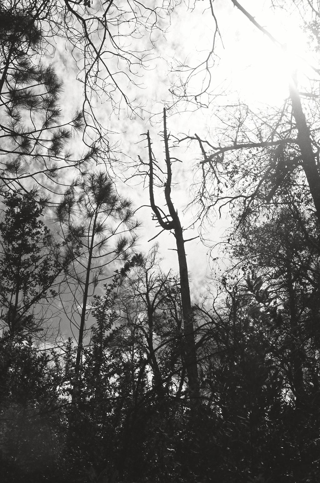 Motorhead Tree  4
