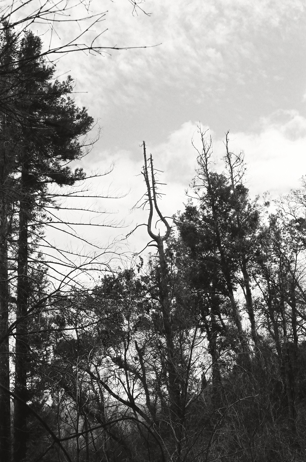Motorhead Tree 3