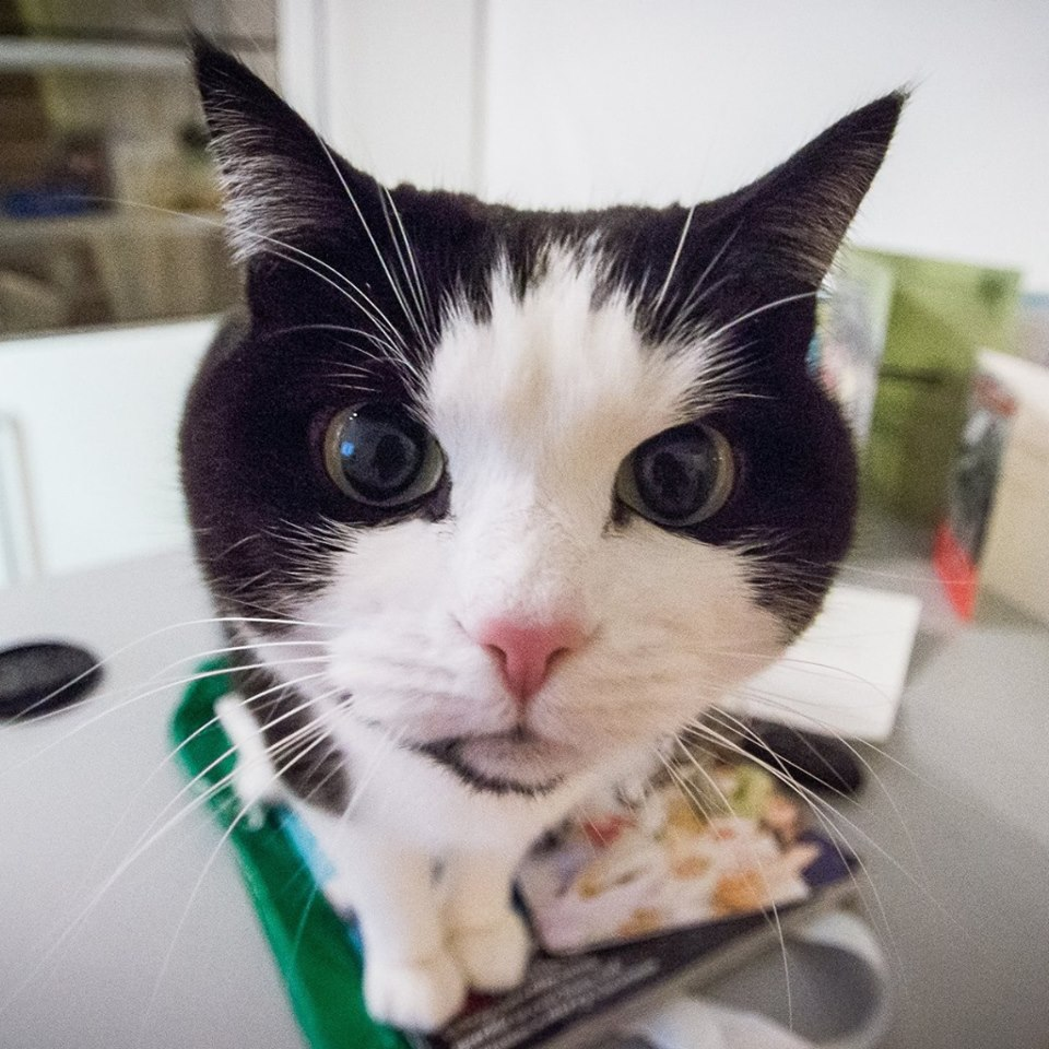 While we await a suitable image of ourselves, have a look at Scampi our cat (who really runs the business)