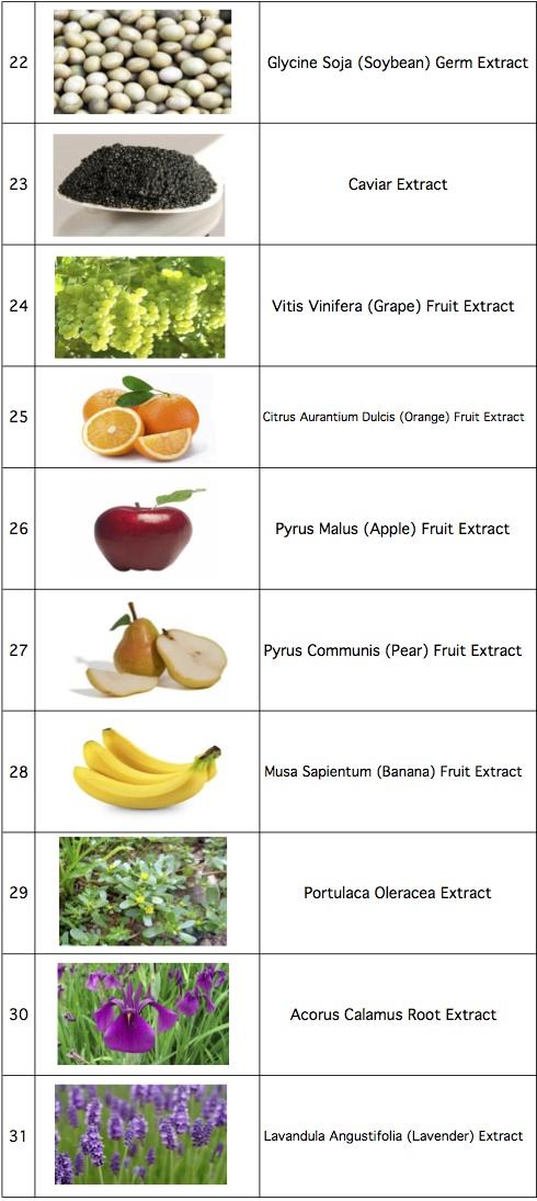 Worksheet in Bloom Ingredients-4.jpg