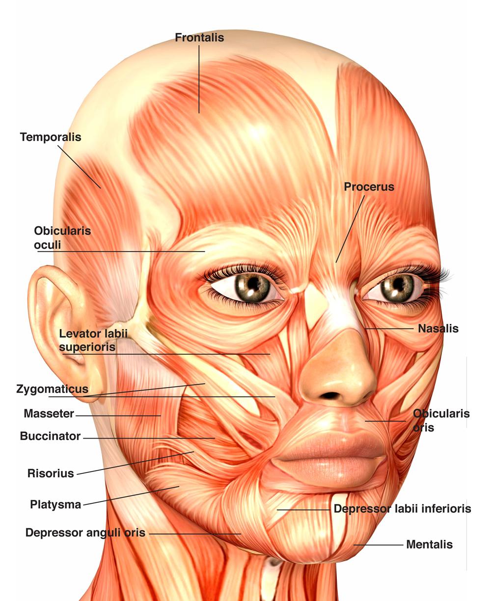 Facial-MMs-1.jpg