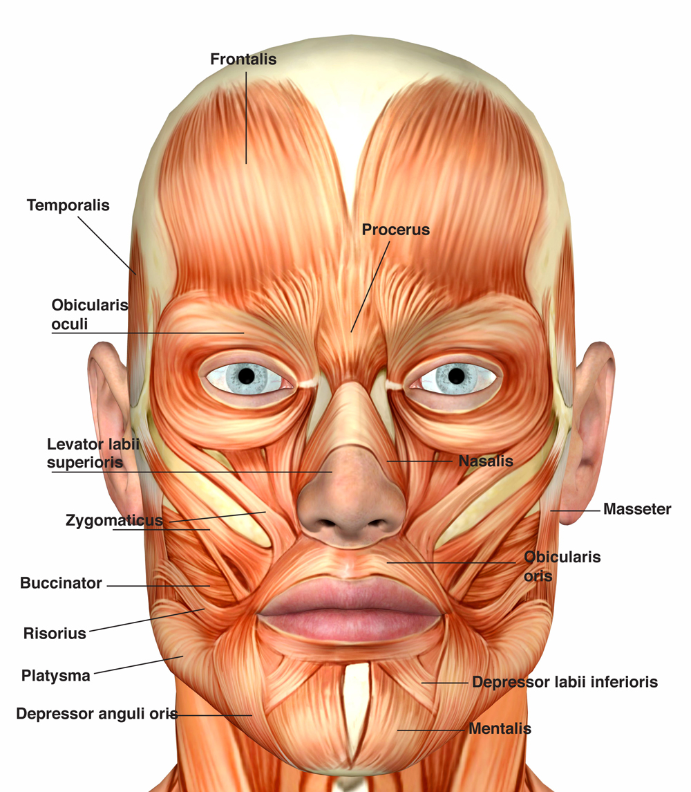 Facial-MMs-2.jpg