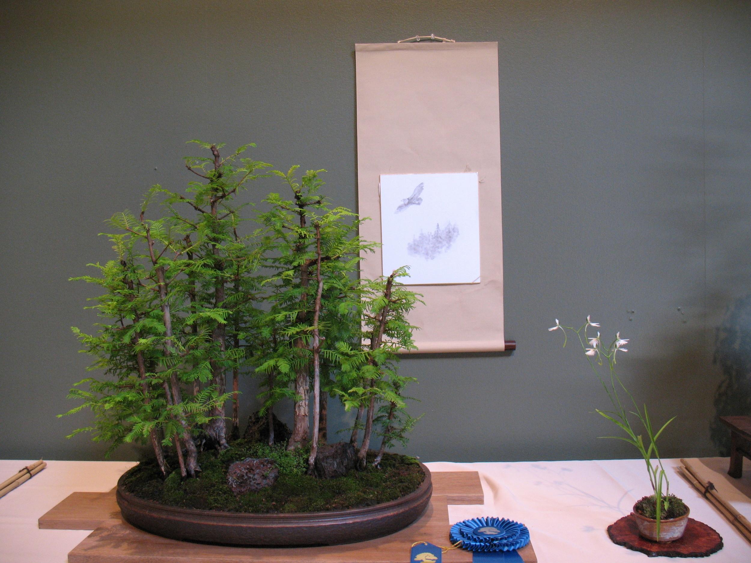 2015 Mid-America Exhibit - Dawn Redwood
