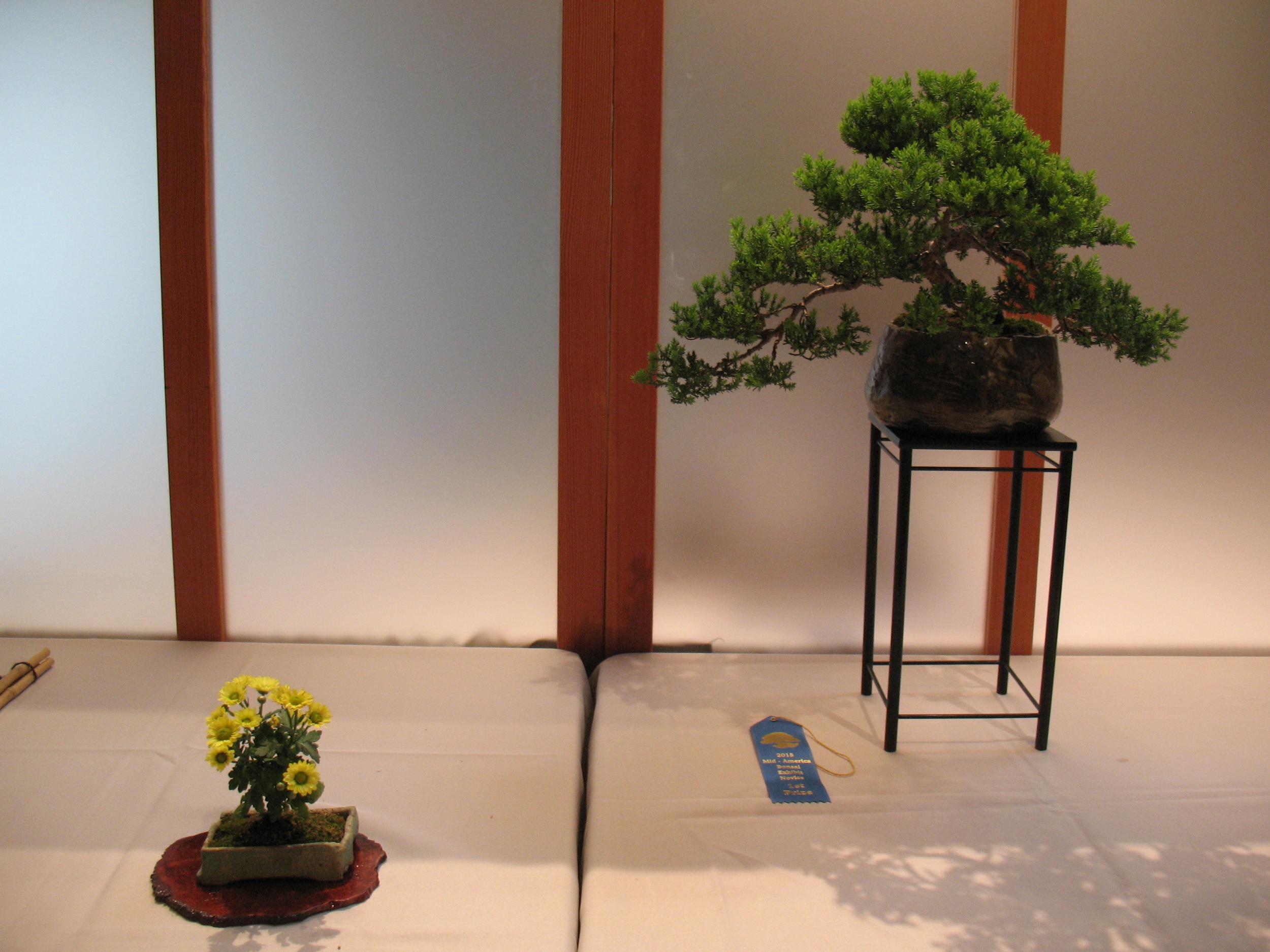 2015 Mid-America Exhibit - Japanese Garden Juniper