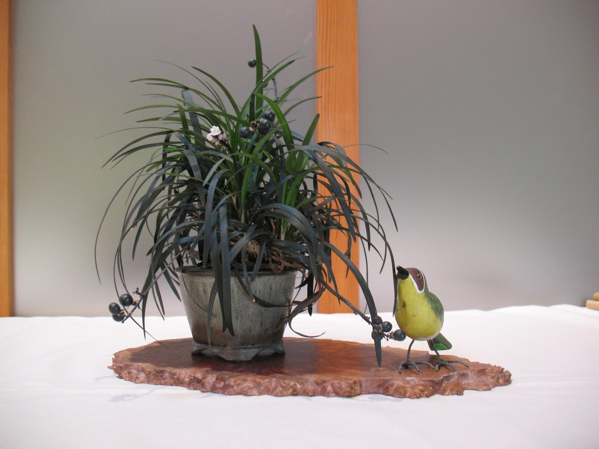 2015 Mid-America Exhibit - Open - Black Mondo Grass