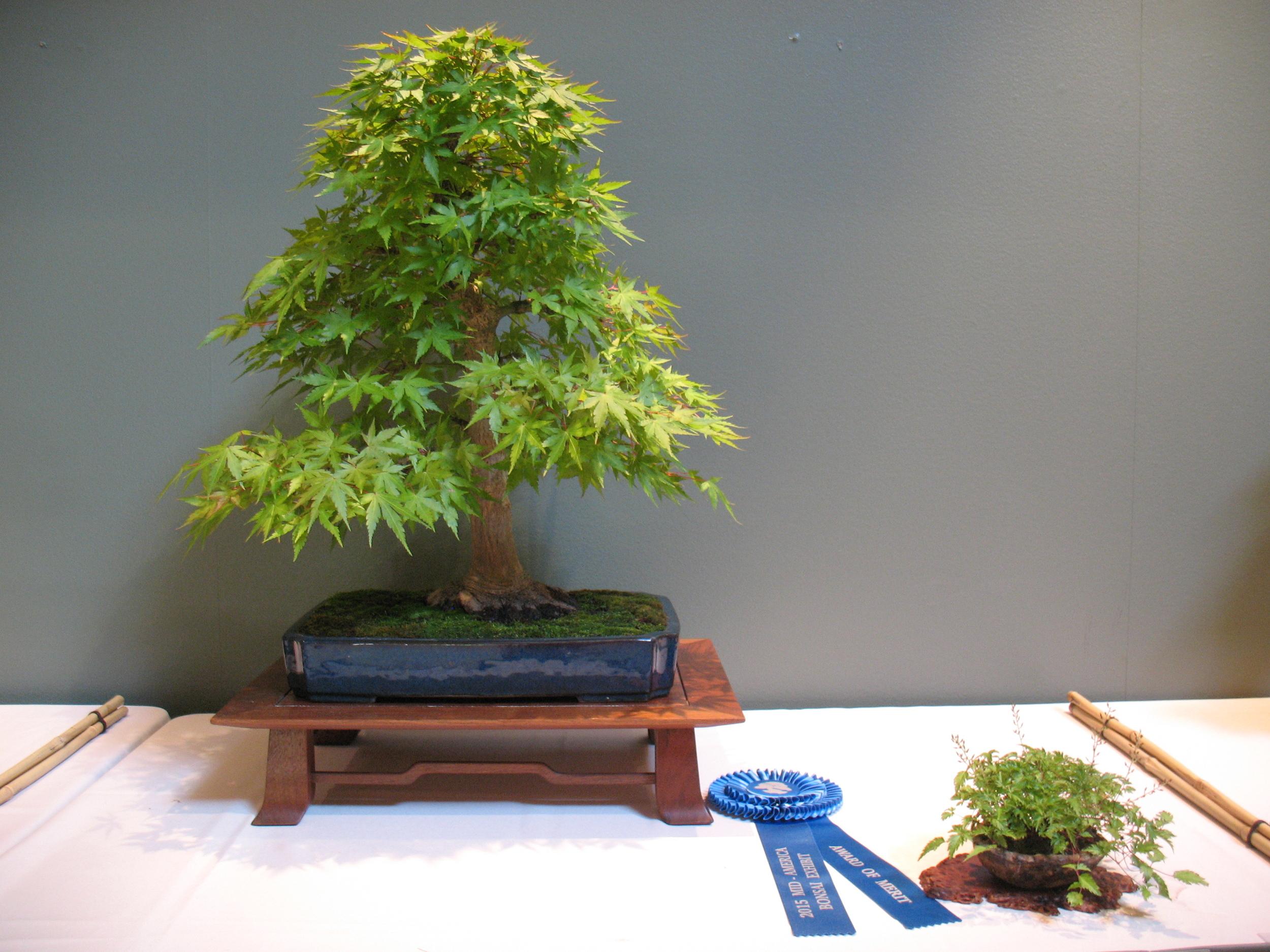 2015 Mid-America Exhibit - Open - Japanese Maple