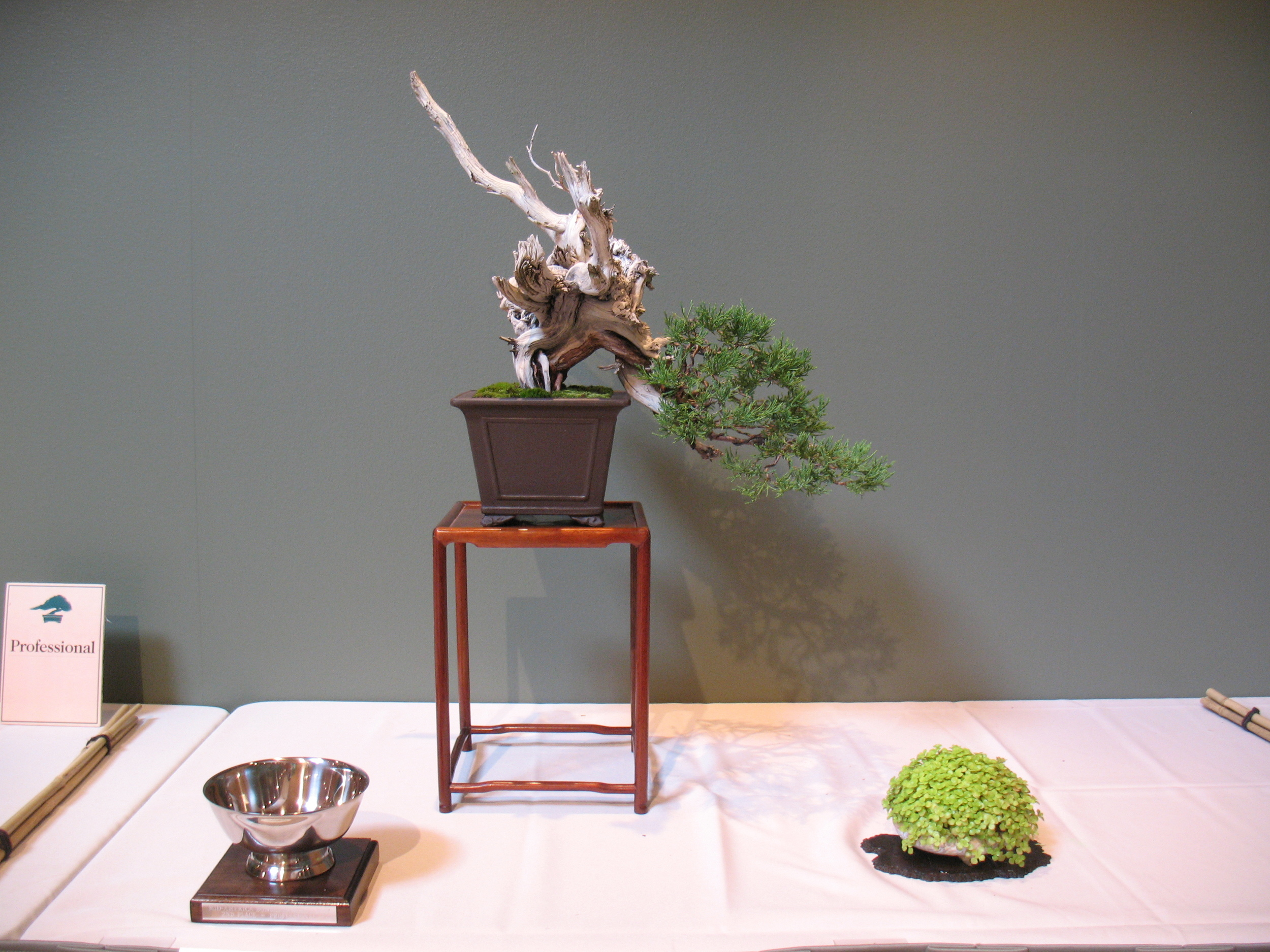 2015 Mid-America Exhibit - Professional - Rocky Mountain Juniper