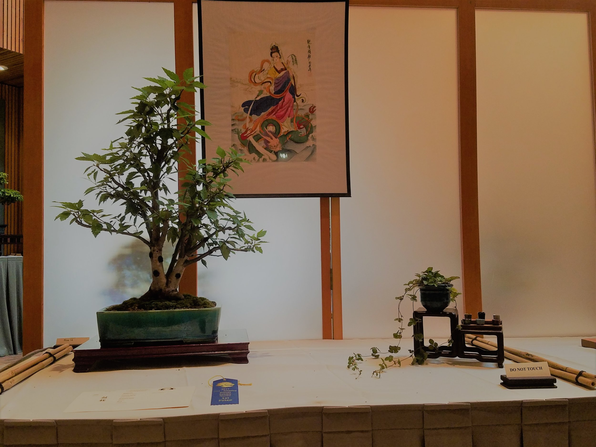 2017 Mid-America Bonsai Exhibition - River Birch - Triple Trunk