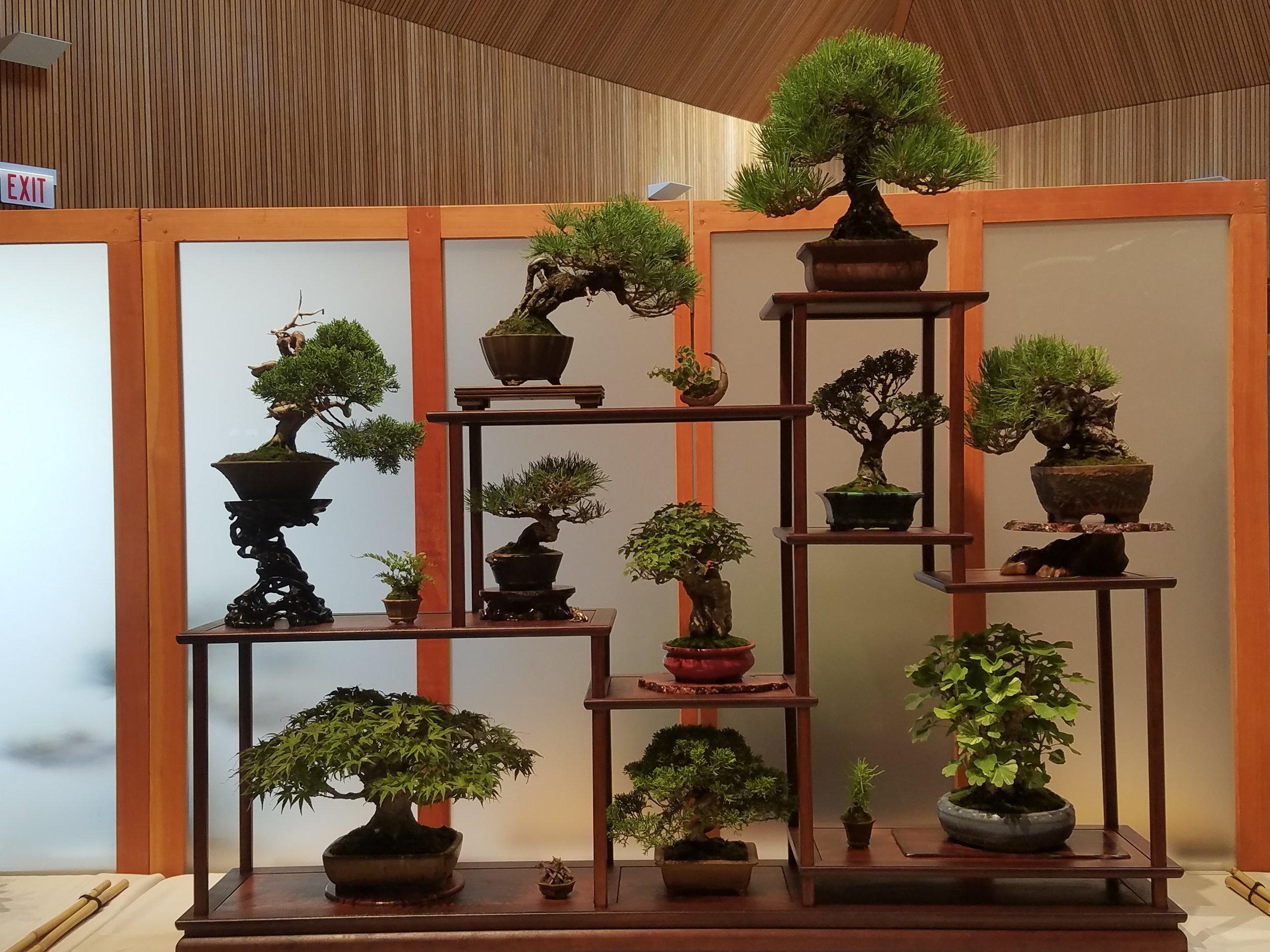 2017 Mid-America Bonsai Exhibition - Shohin 10 Tree Display