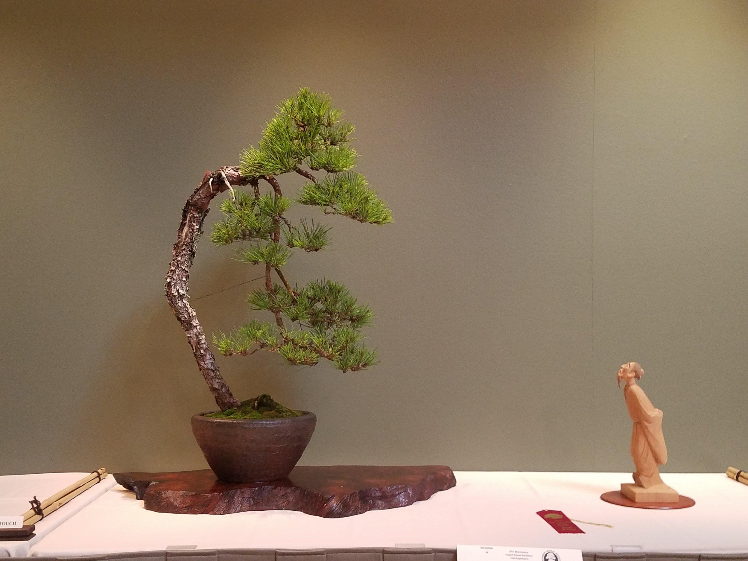 2017 Mid-America Bonsai Exhibition - Japanese Red Pine - Bunjin