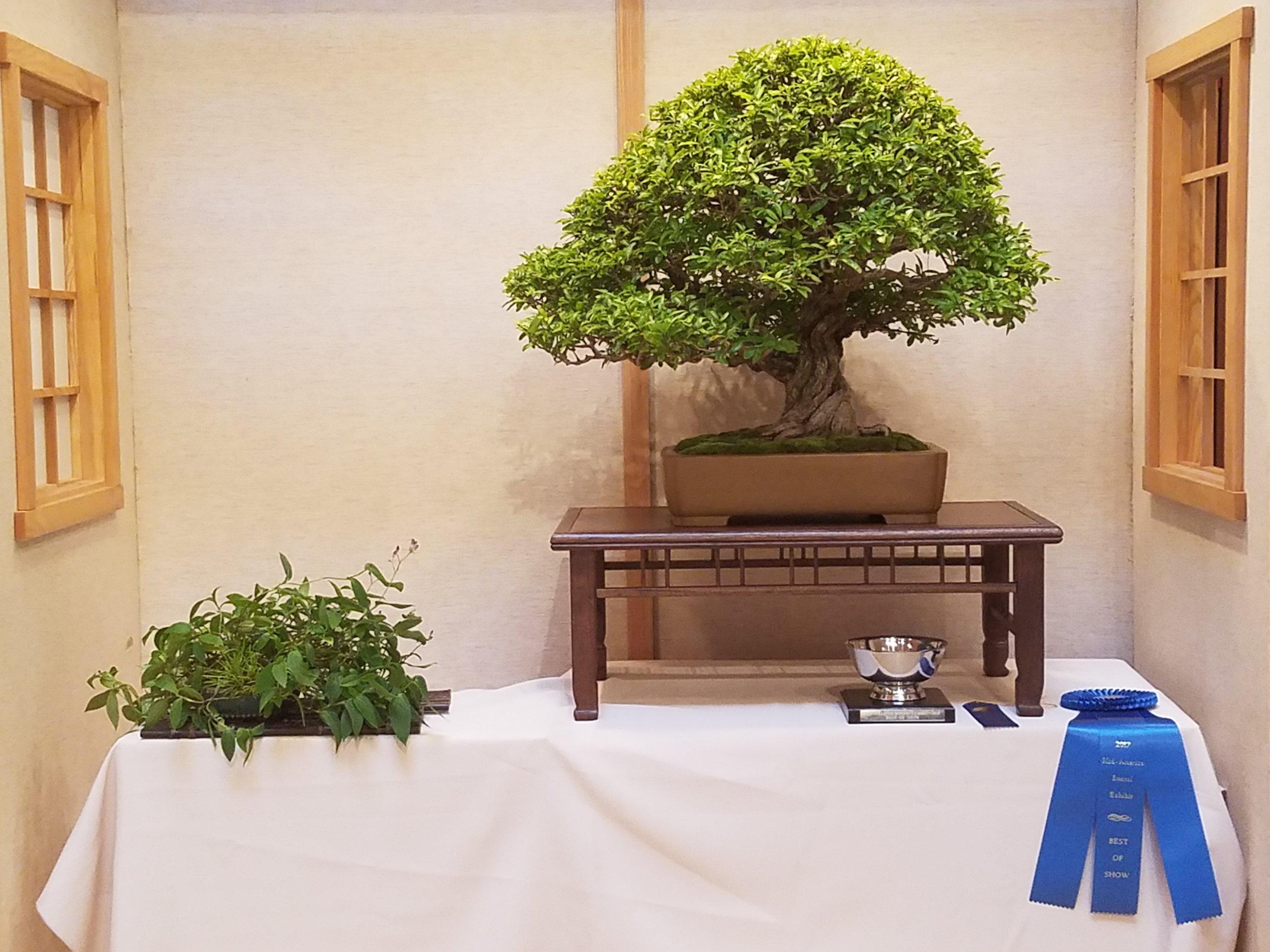 2017 Mid-America Bonsai Exhibition - Pomegranate - Informal Upright