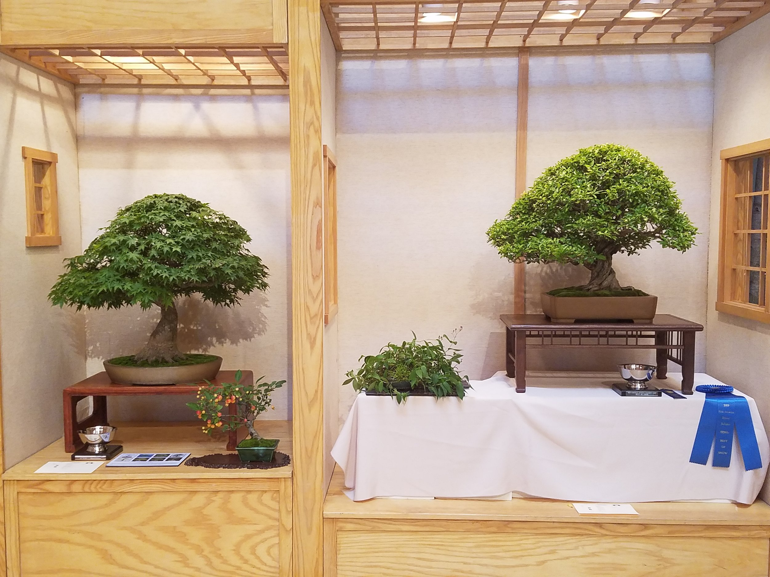 2017 Mid-America Bonsai Exhibition - First Place Professional and Best of Show Trees in Tokonoma