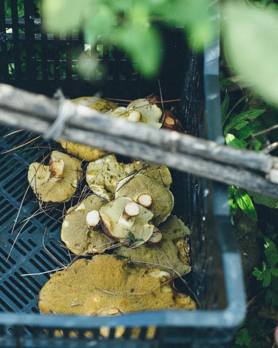 Wild mushrooms foraged by Matt & Lentil.