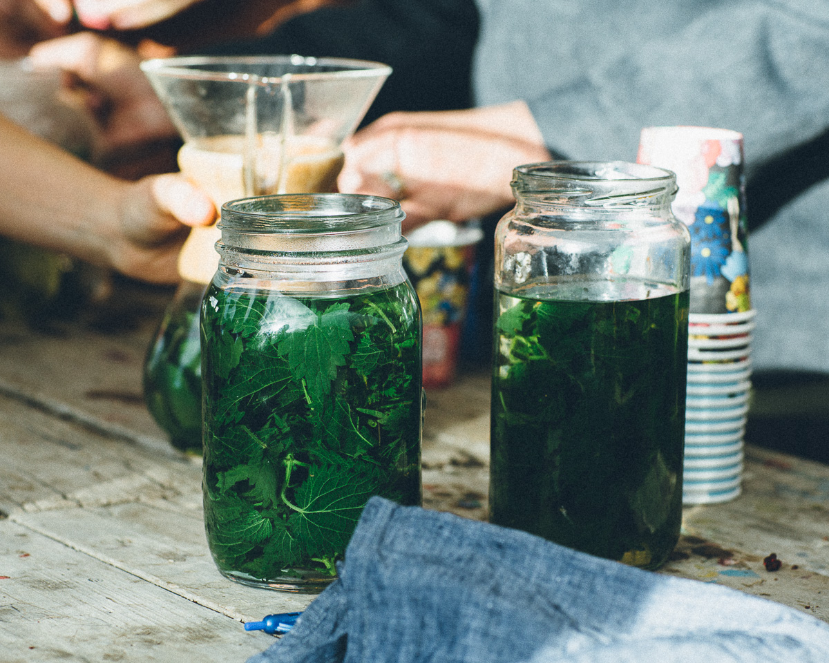 Herbal teas of kawakawa and nettle - why not brew direct from nature?