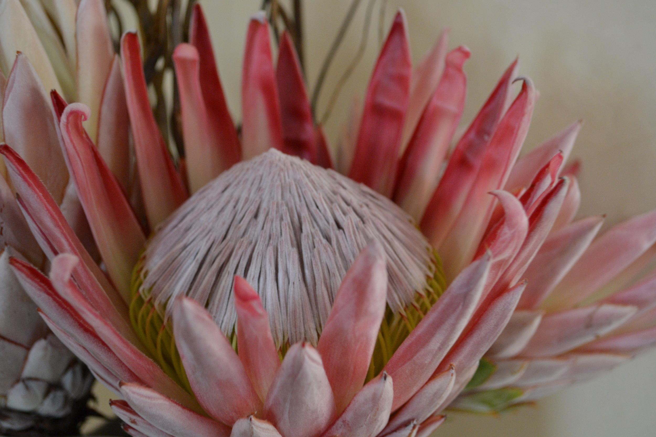 Cape Town_0002.jpg