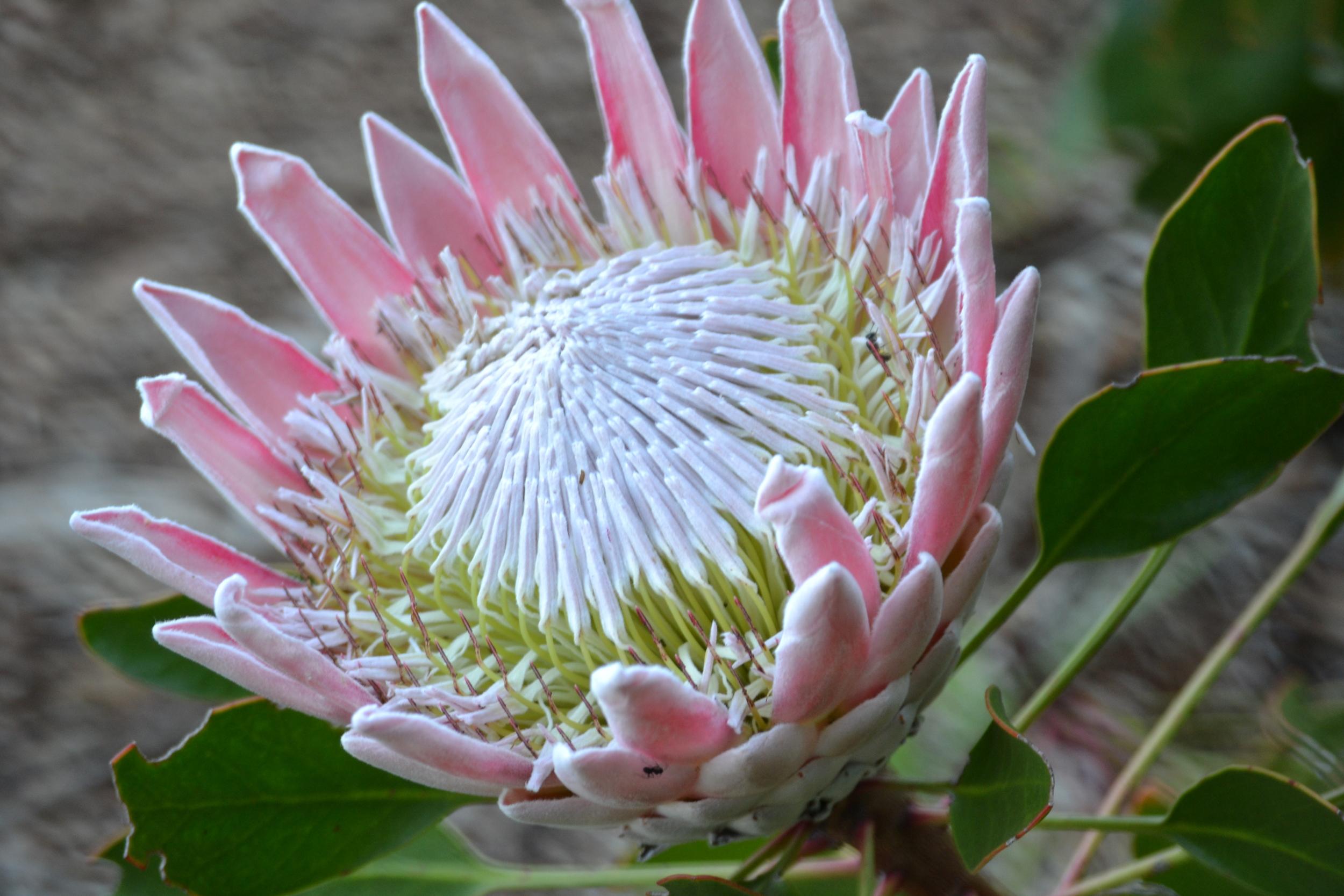 Cape Town_0067.jpg
