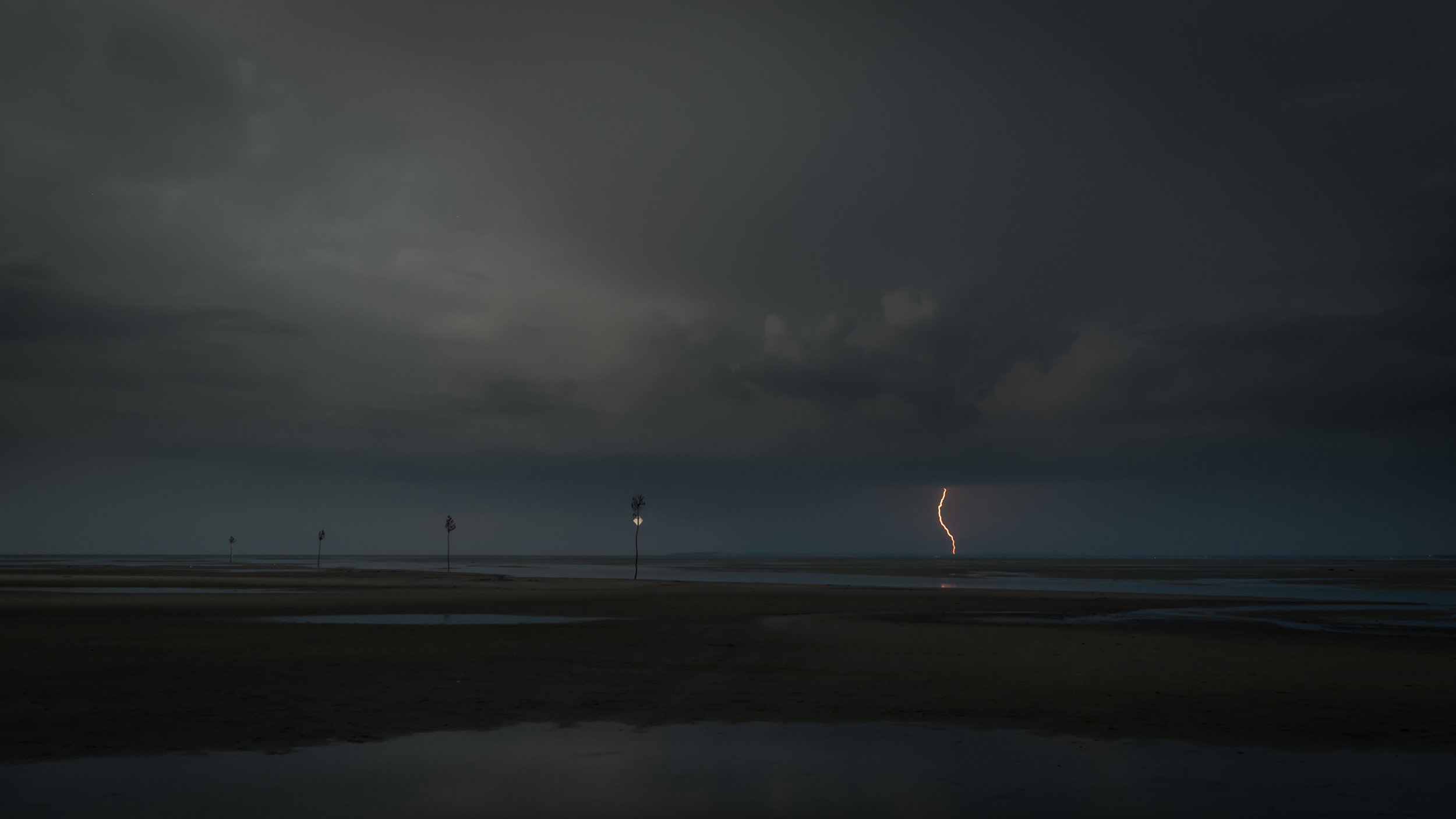 Clam Tree Lightning