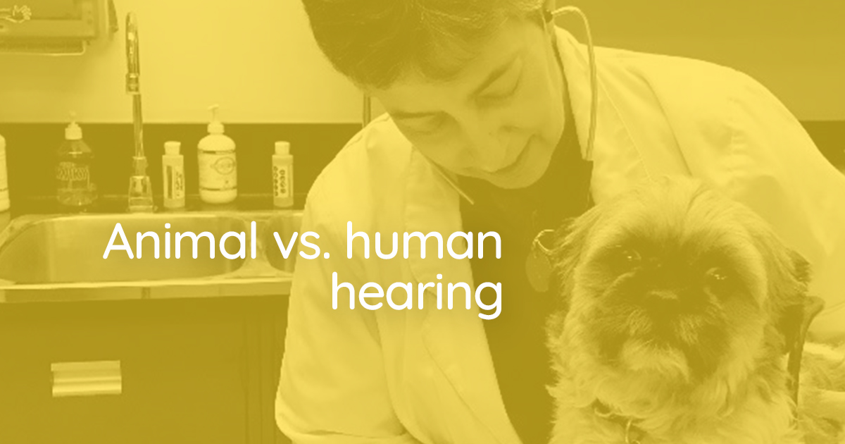HEARING TEST >Give your ears a pop quiz of sound, to find out all you can hear -