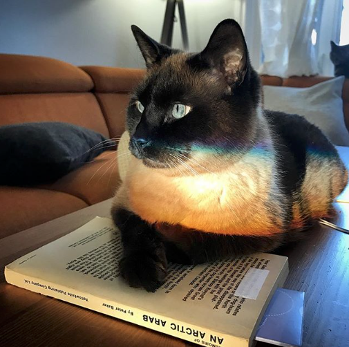 Orwell reading.png