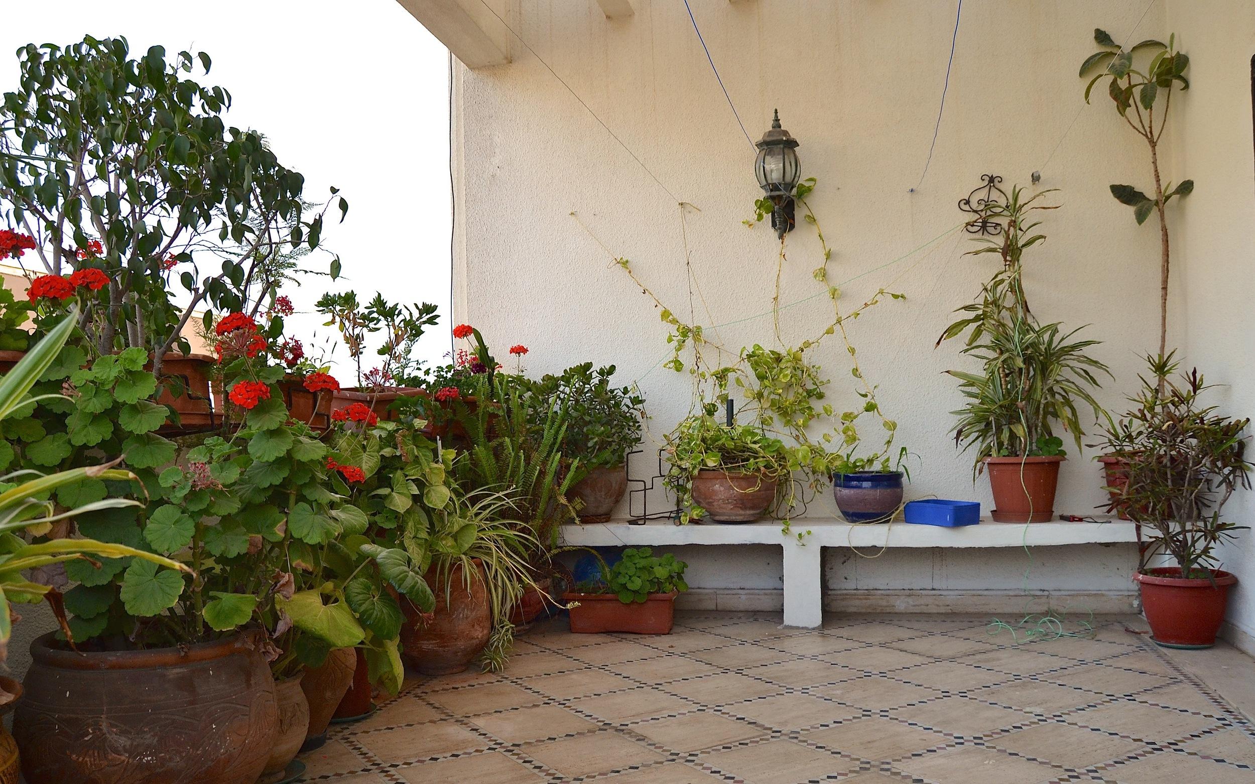 Omar's garden is anoasis in Rabat's warm summers.