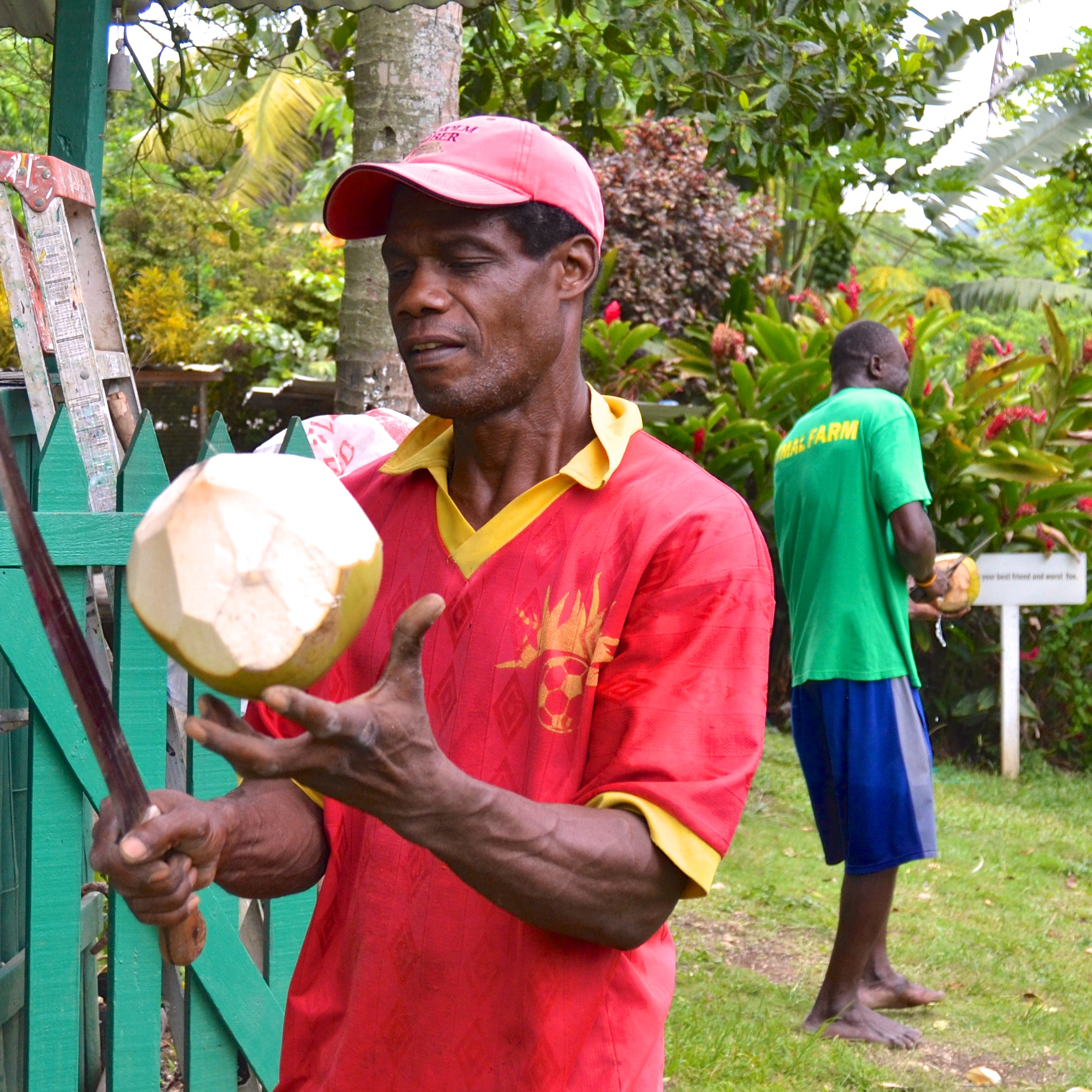 At the end of a tour, guests can enjoy fresh coconut water.