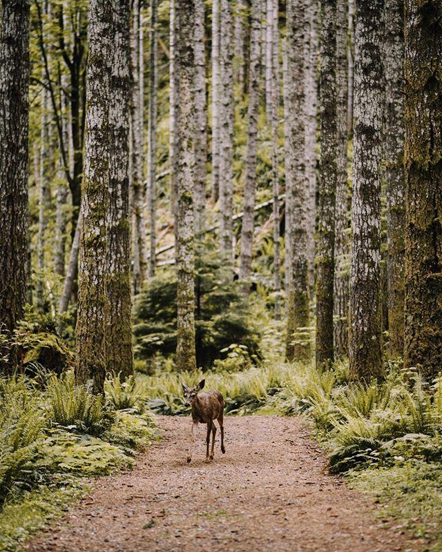 Blacktail Buck. Washington. Always amazed by these beautiful creatures.