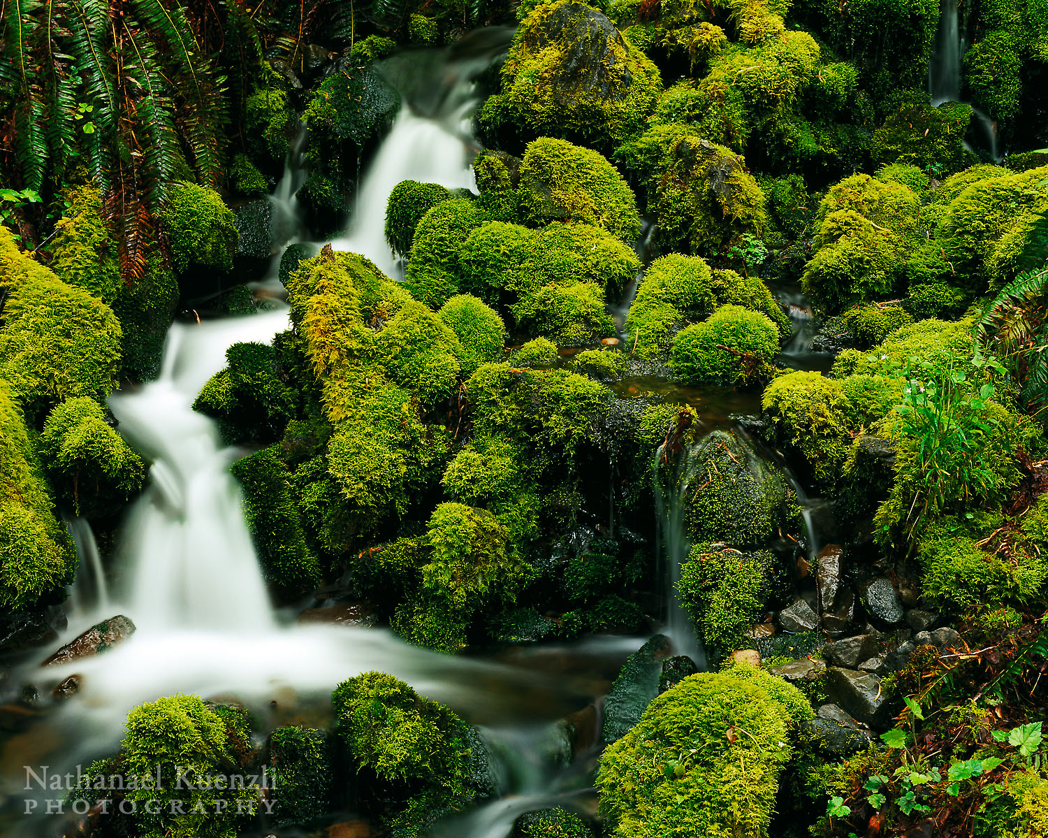 Water and Moss, Olympic National Park, Washington, May 2007