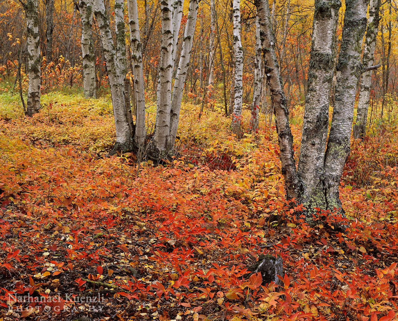 Autumn, Cascade River State Park, Minnesota, October 2008