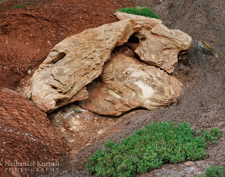 Rock Detail, Capitol Reef National Park, Utah, May 2005