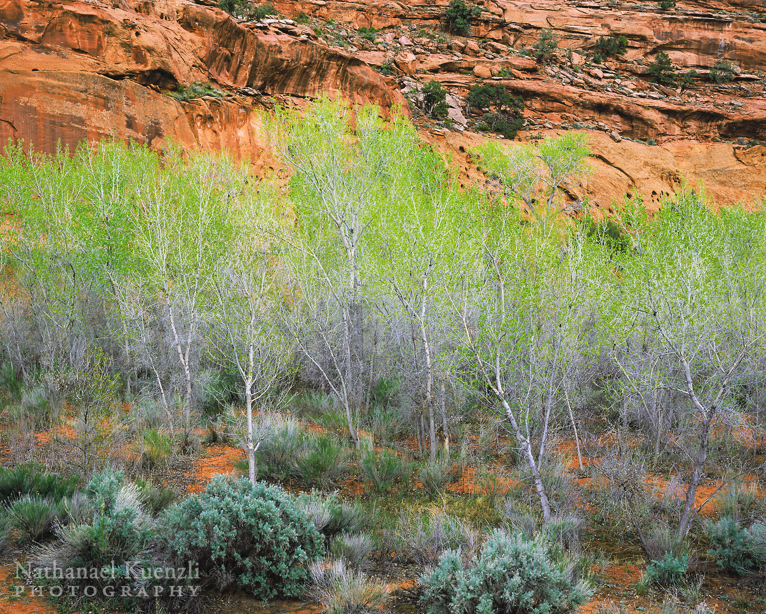 The Gulch Outstanding Natural Area, Grand Staircase-Escalante N.M., Utah, April 2005