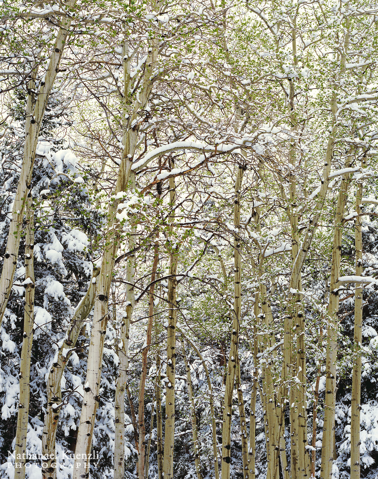 Spring Snow, Horseshoe Park, Rocky Mountain National Park, Colorado, May 2004
