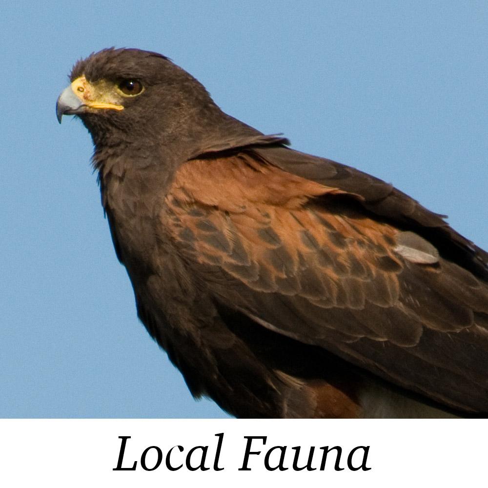 Fauna Photos.jpg