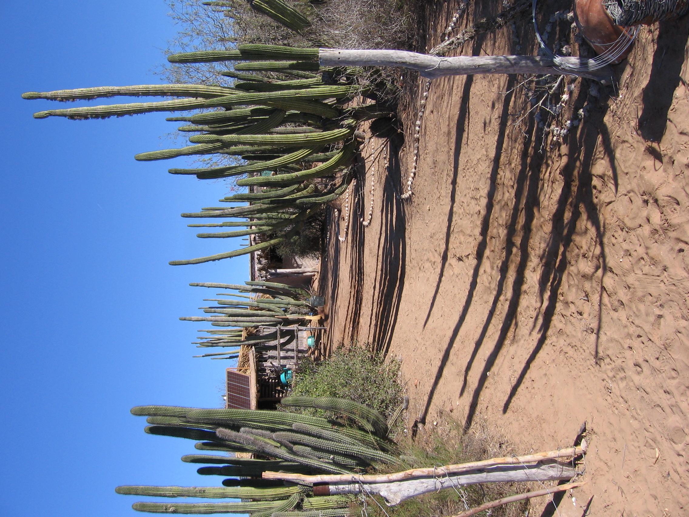 Sallie's Mexico 00025.jpg
