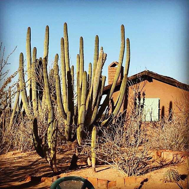 La Casita.  #fieldstationlife #cactus #fieldstations #huatabampo #costeropitaya #pitayacoast #beach #beachlife #desert #naturalbuilding