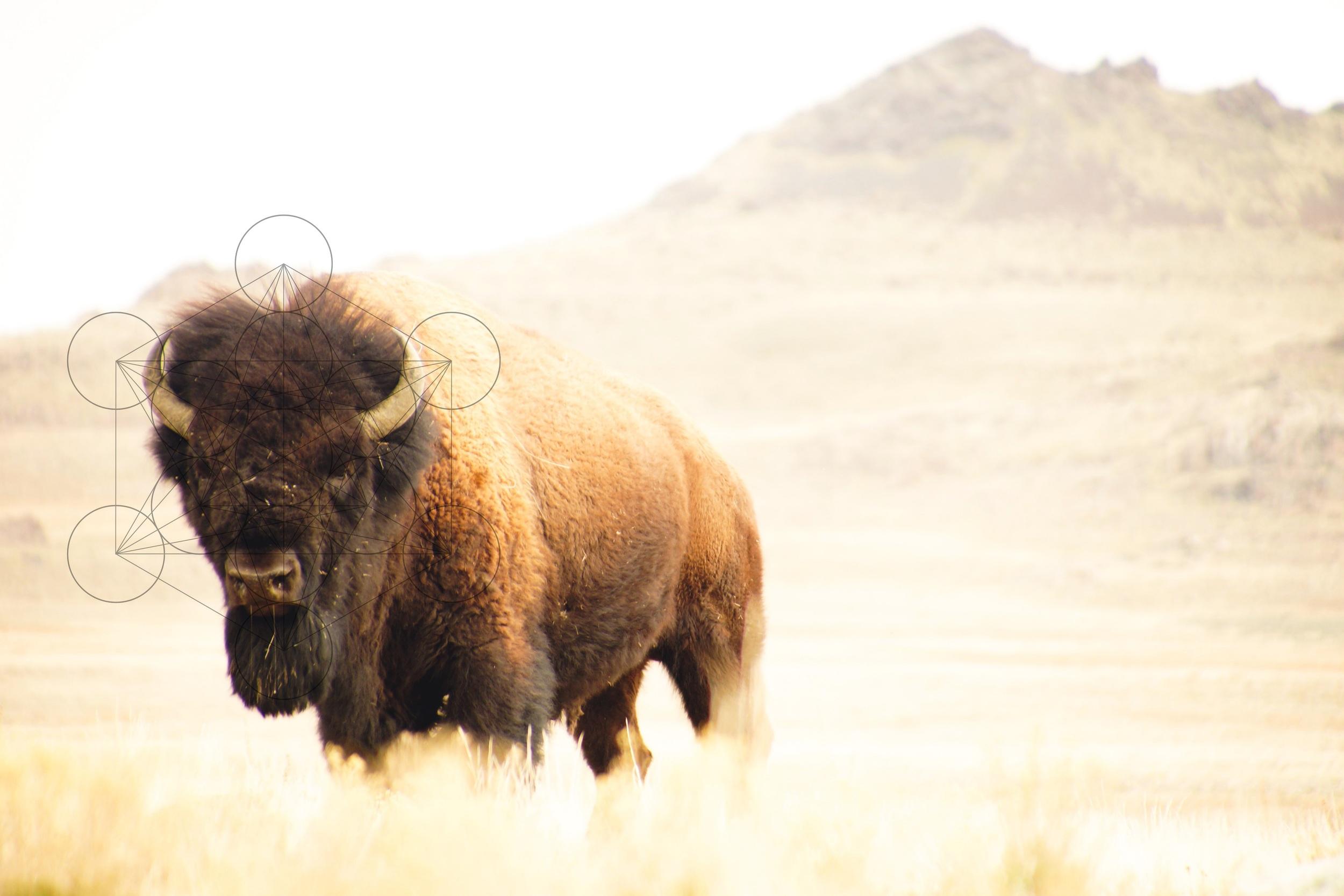 Antelope Island State Park. Utah
