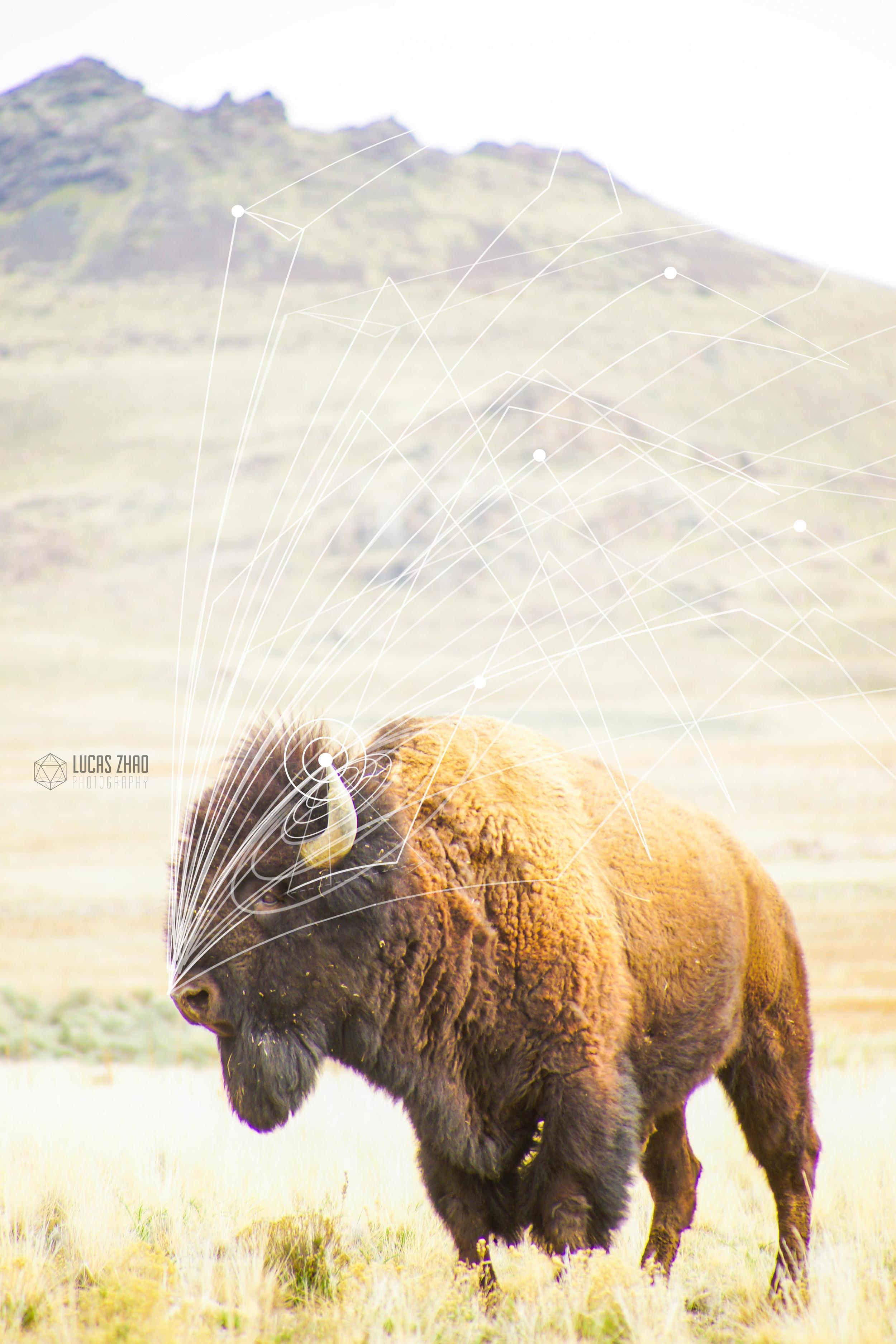 bisonfinalwater.jpg