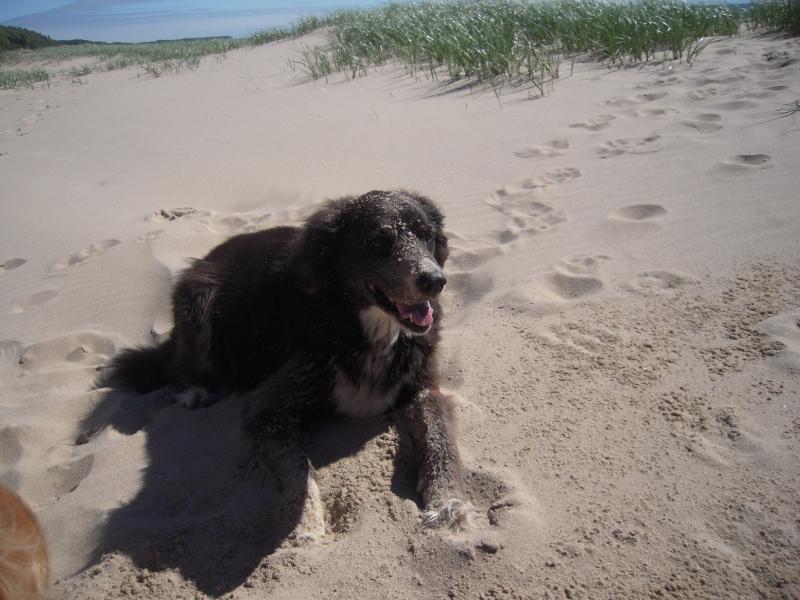 The author's dog, Max (Image  © Diane Payne).