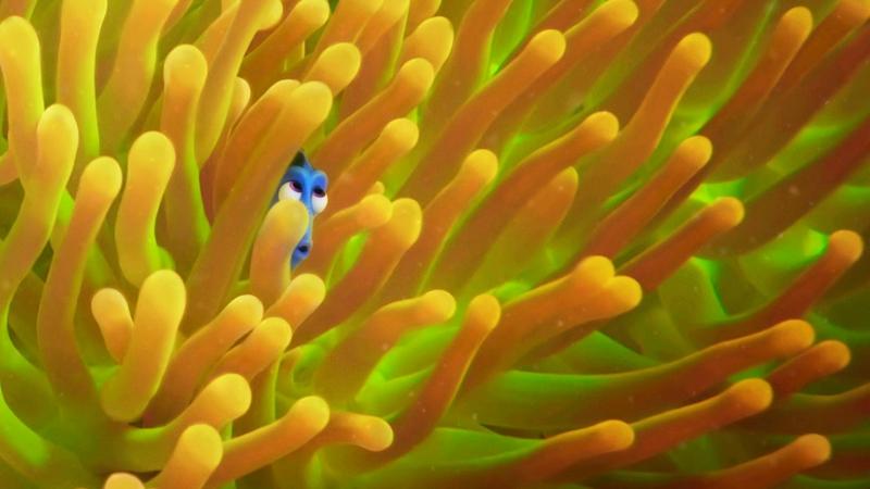 Finding Dory (Image © Disney/Pixar)