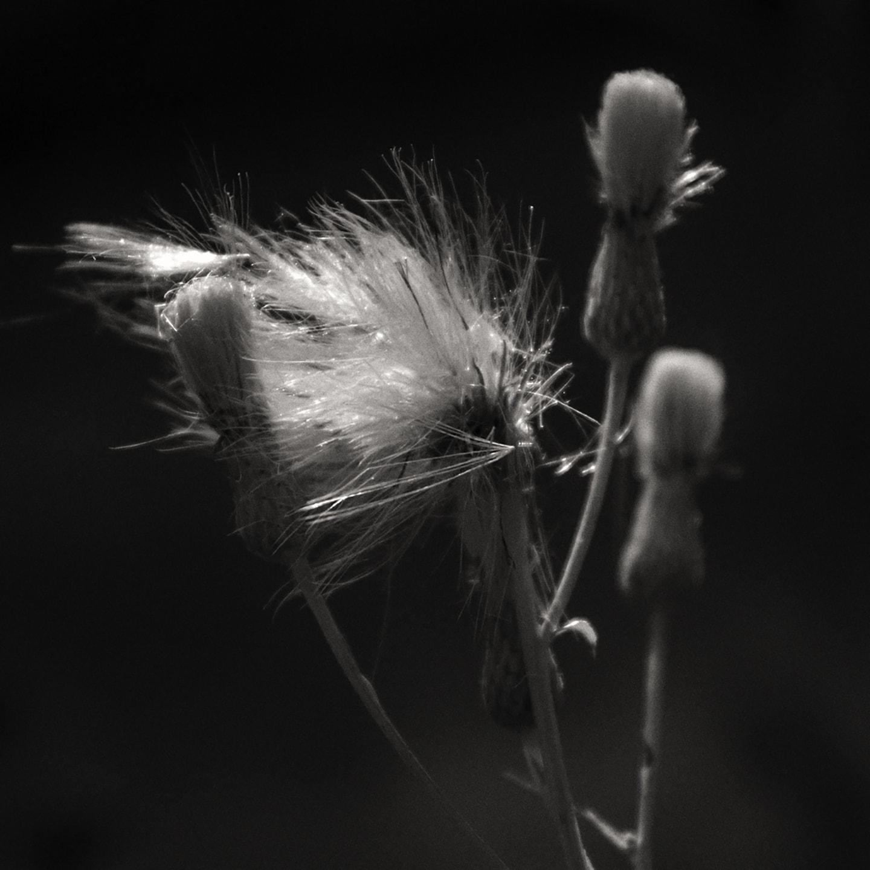 Image © Marcia K. Bilyk