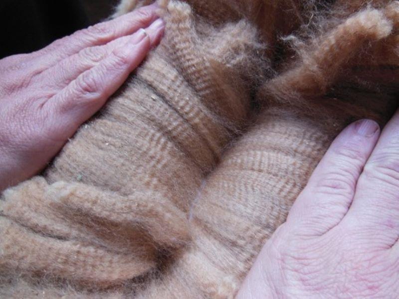 Ideuma Alpaca 5.jpg