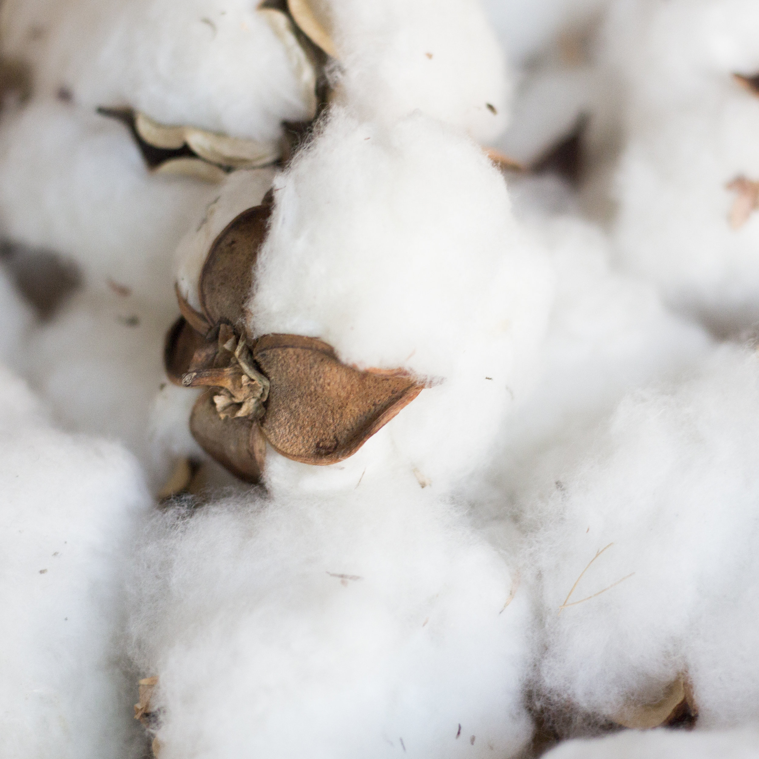 Texas Organic Cotton Marketing Cooperative