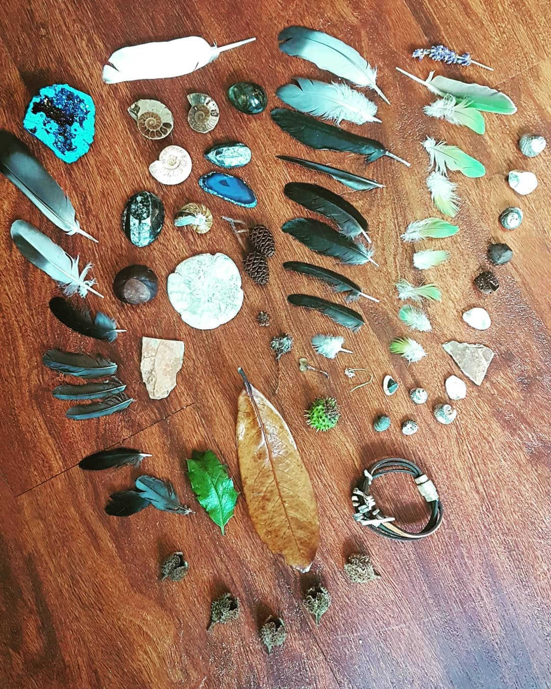The entire collection of treasure from the trip.