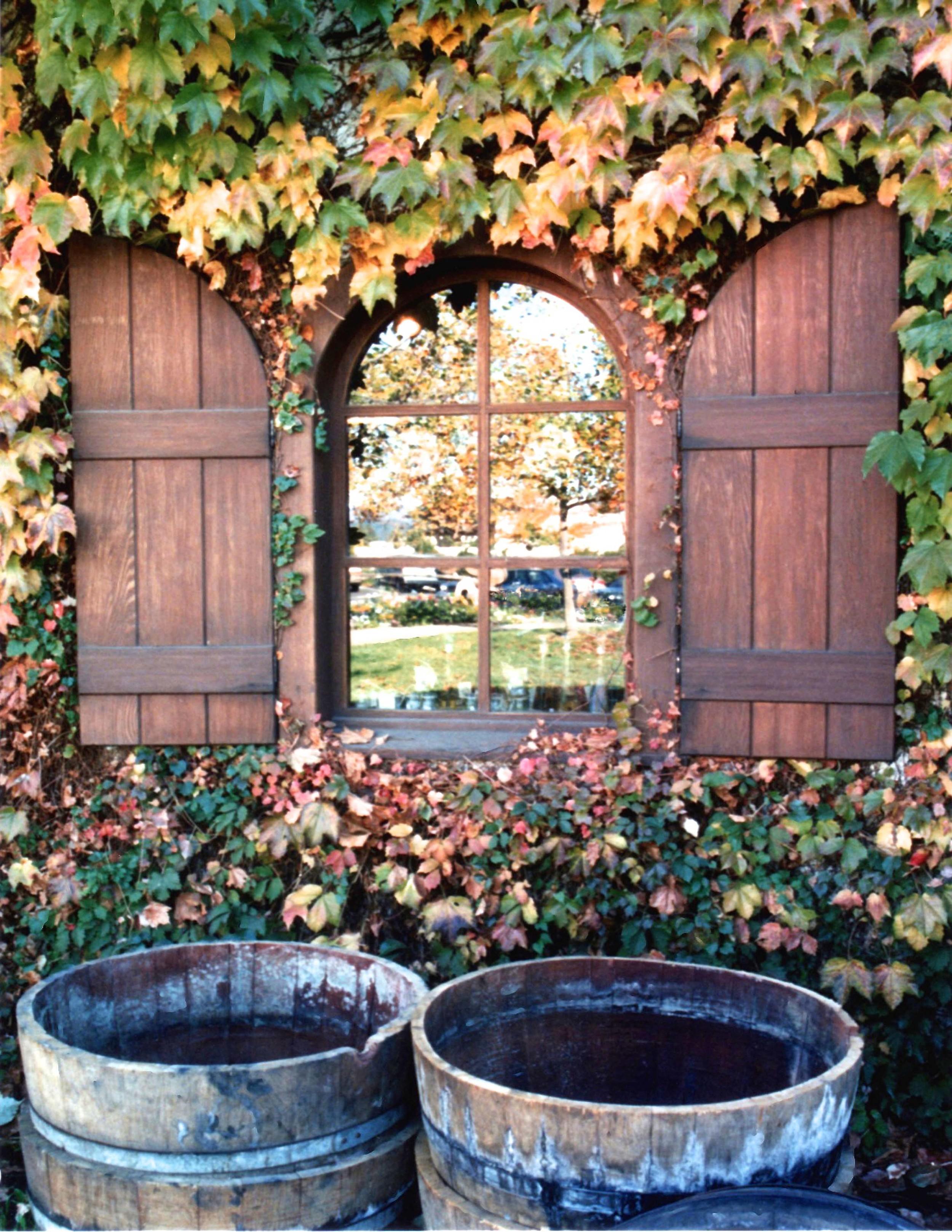 Vines, Tubs & Window  U108