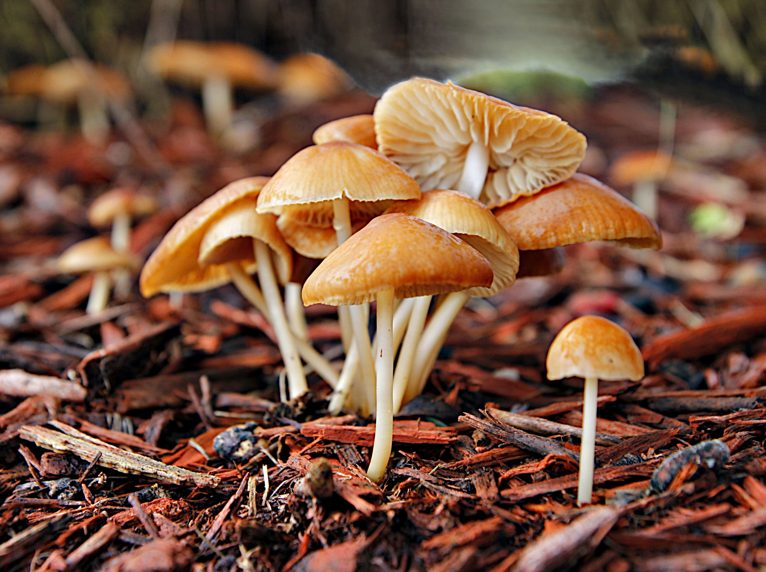 Mushroom Family   F104