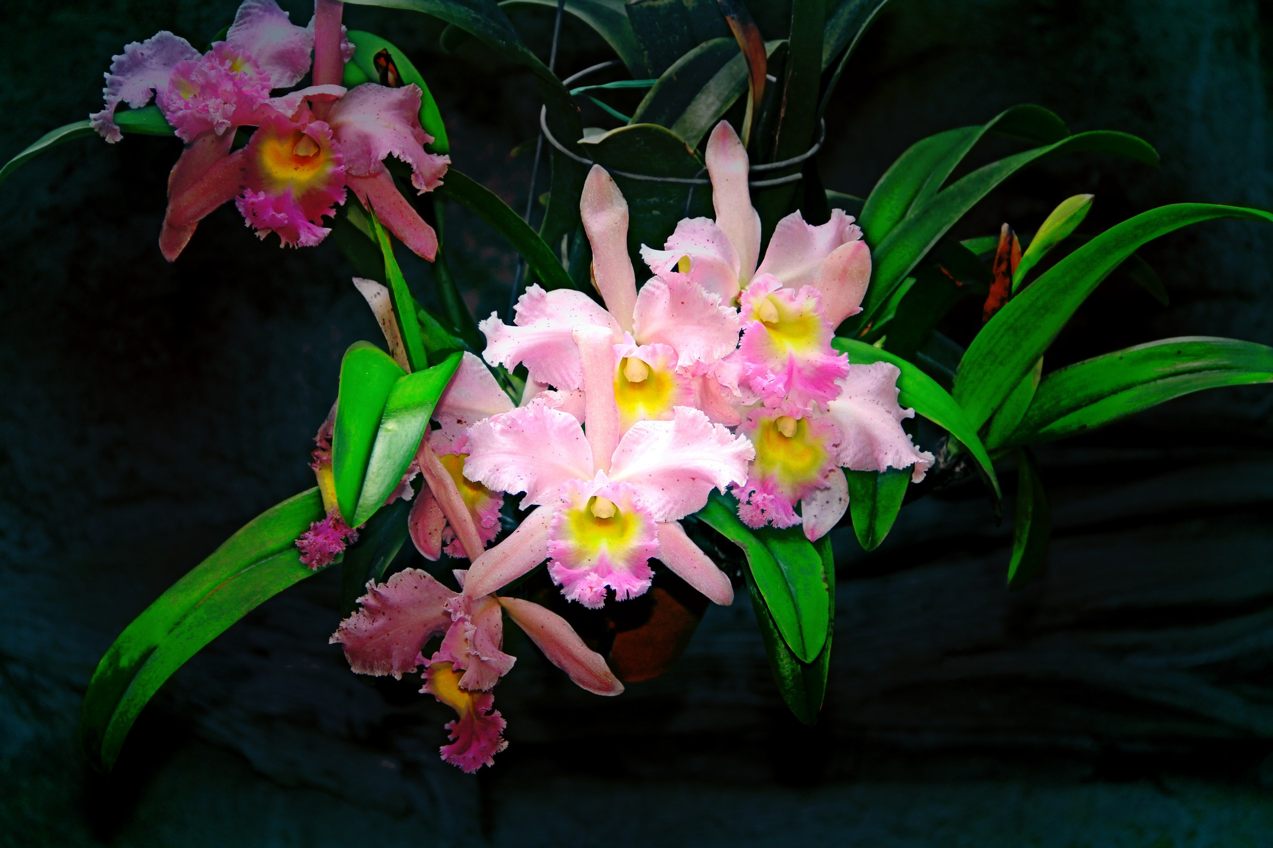 The Beauty of Orchids  F105