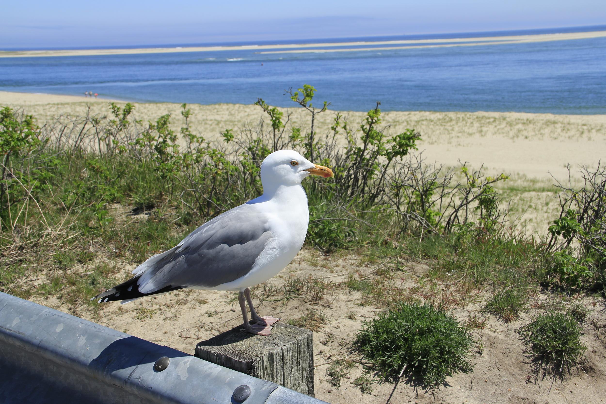 Vigilant Seagull  F108