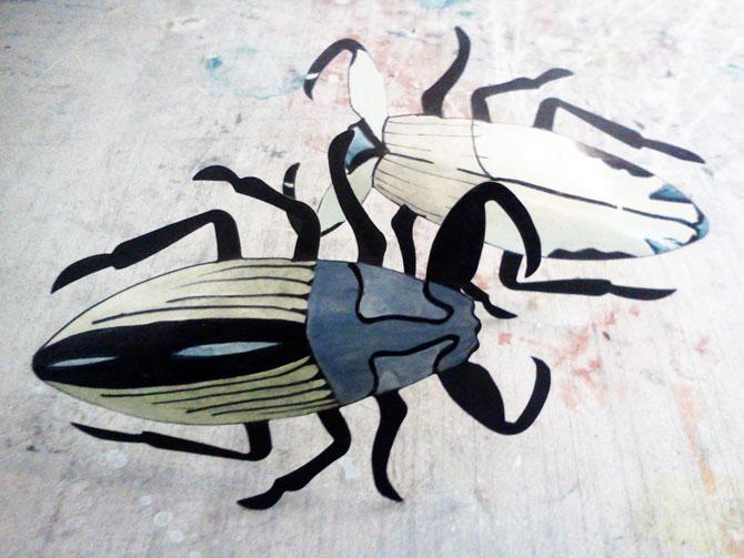 Beetles1_smaller.jpg