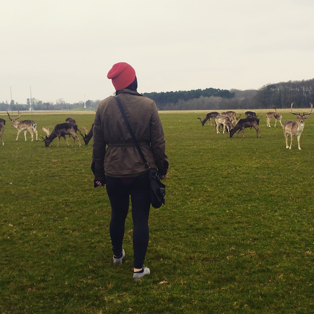 Deer in Phoenix Park. They just chill like that. So weird.