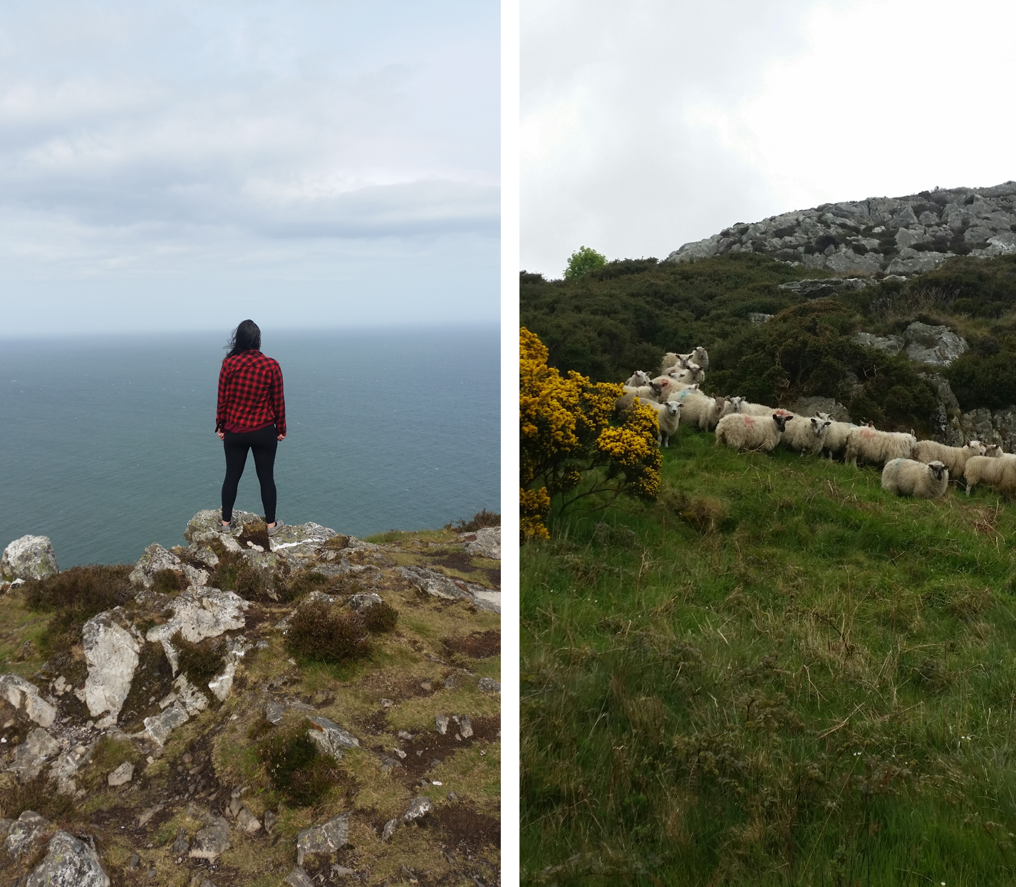 Bray is quite lovely. The sheep were so skittish though!